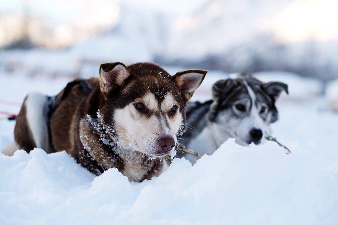 Lapland Husky Sled Safari from Tromso, Tromso, NORUEGA
