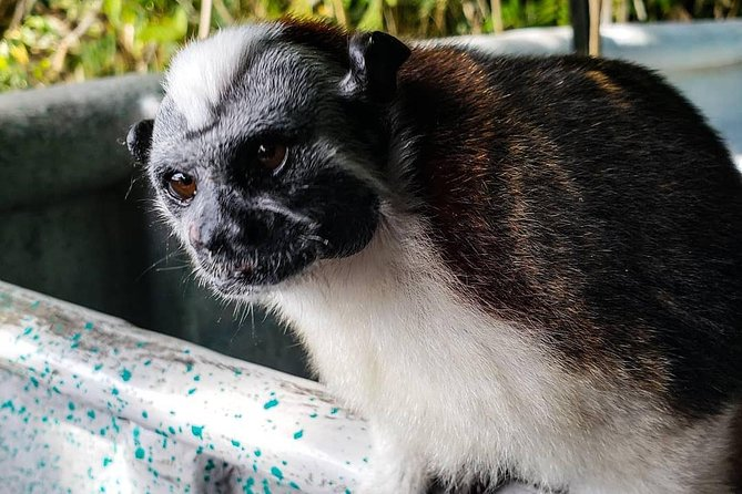 Full-Day Monkey Island and Indian Village Tour from Panama City, Panama, Ciudad de Panama, PANAMA