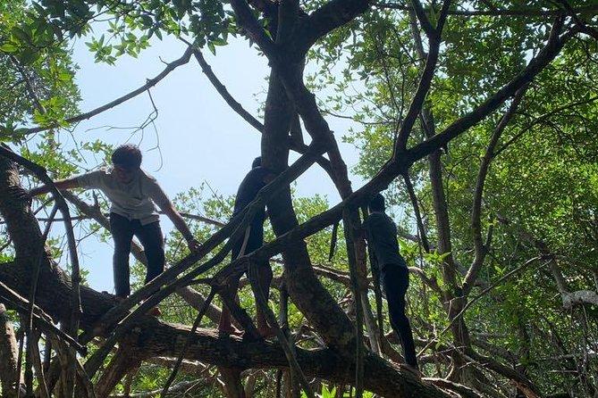 Mangrove Adventure, Kalutara, SRI LANKA