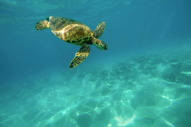 Caretta-Caretta Turtle Trip, Zante, Greece