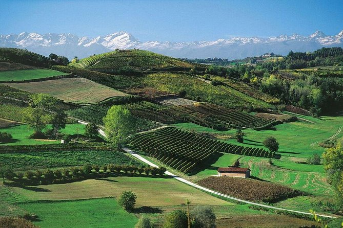 3 Nights Langhe Experience: Food Wine and Truffles in the Barolo and Barbaresco Regions, Langhe-Roero y Monferrato, ITALIA