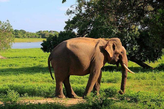 Private Jeep Safari tour at Wilpattu National Park from Sigiriya or Dambulla, Sigiriya, SRI LANKA