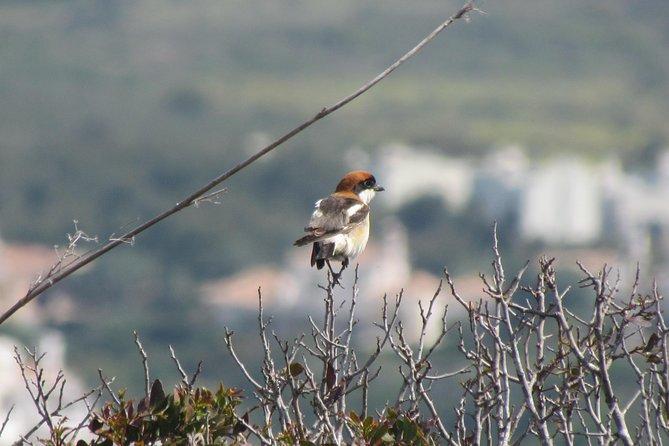 Dia de observação de aves a volta de Sagres, Lagos, PORTUGAL