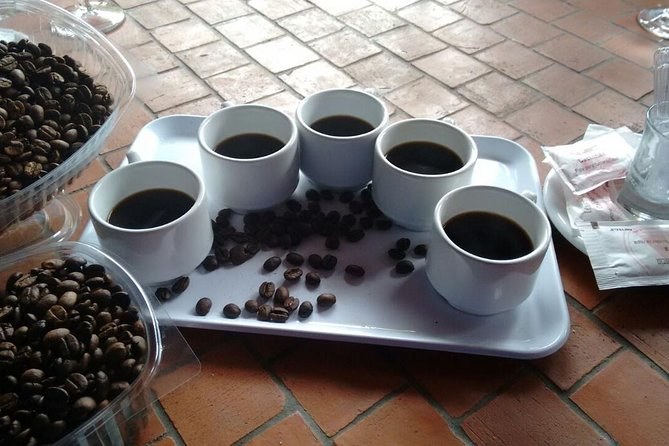 Excursão encantadora pelo norte com degustação de vinho, visitas a plantações de café e vales tropicais, Gran Canaria, Espanha