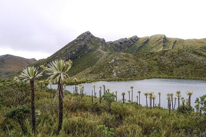The Mountain of water: Chingaza National Park, Bogota, COLOMBIA