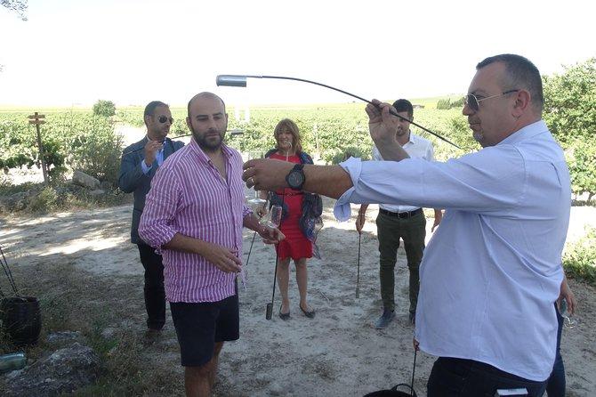 Full Day Private Sherry Wine Experience from Cádiz, Cadiz, ESPAÑA