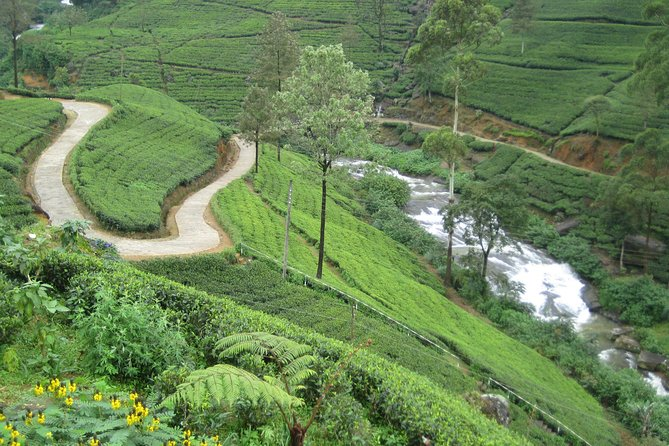 Nuwara Eliya Day Tour - Hill Country Tea Plantation Tour, Kandy, SRI LANKA