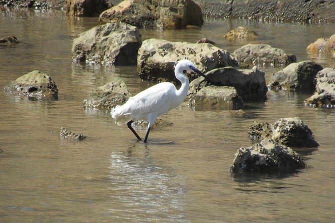 Observação de aves na Abicada, Lagos, PORTUGAL