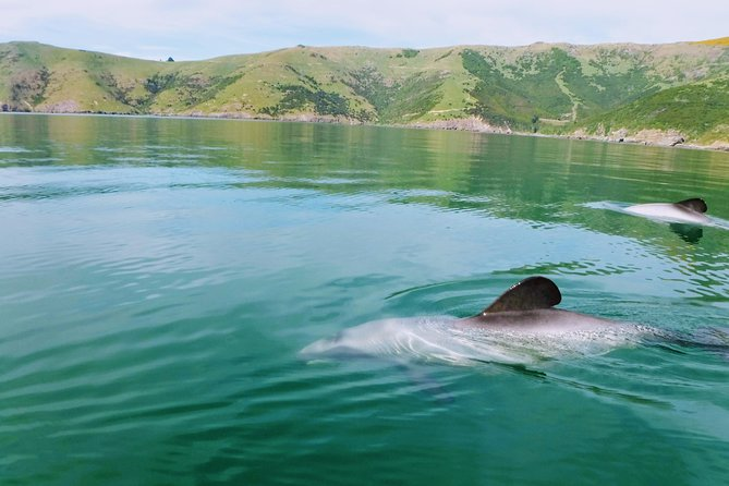 The Sunrise Wildlife Safari is our recommended Safari of the day! This is a once in a lifetime chance to paddle in an extinct volcano basin. Take in breath-taking scenery and have the opportunity to experience chance encounters with some of the most endangered marine life on the planet including Hector Dolphins, white flippered penguins, and Orca located in Akaroa Harbor during their most active time of the day, only 80 minutes from Christchurch. <br><br>Small group numbers are key as we are visiting fragile, pristine, and relatively undisturbed natural areas, enjoy exploring this marine reserve in a low-impact and environmentally responsible way. Close encounters. No noise, No engines, No crowds, No pollution. So come and join us! Explore, Experience and Enjoy!
