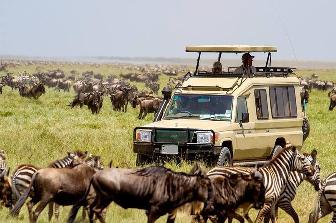 On this 5-day camping safari, you will see flamingos and other water fowls in a crater filled with wild animals in the Ngorongoro Conservation Area and a large selection of animals in the Serengeti National Park.