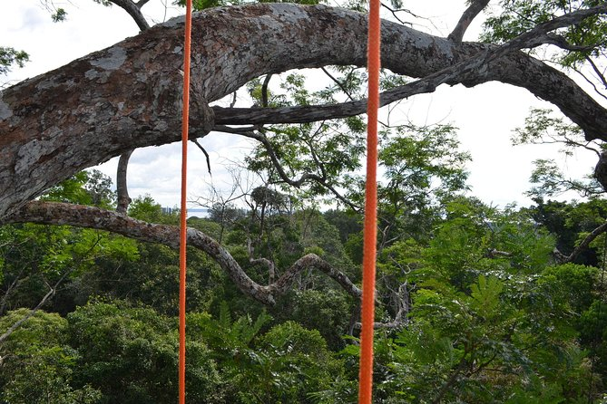Tree Climbing in the Amazon, Manaus, BRASIL
