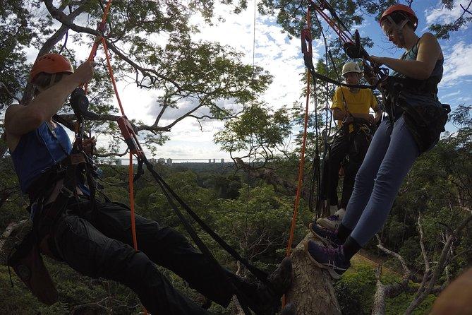 Tree Climbing in the Amazon, Manaus, BRASIL