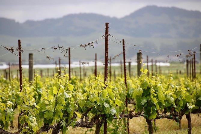 Experience Legendary Winemaking: Napa Valley Wine Tour from San Francisco, San Francisco, CA, ESTADOS UNIDOS