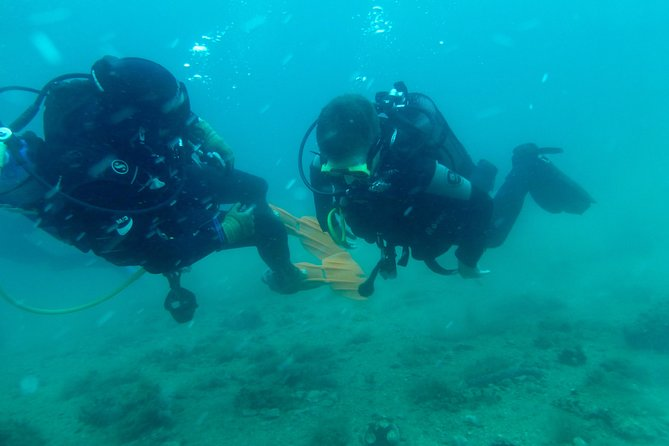 Discover Scuba Diving Package is a special program for beginners, who want to see amazing underwater world.<br><br>Program start every day at 11 am and 3 pm. You need to specify the time of arrival with text message to +385976038966 +385989904246 <br><br>or thrue e-mail: info@orcadiving.hr