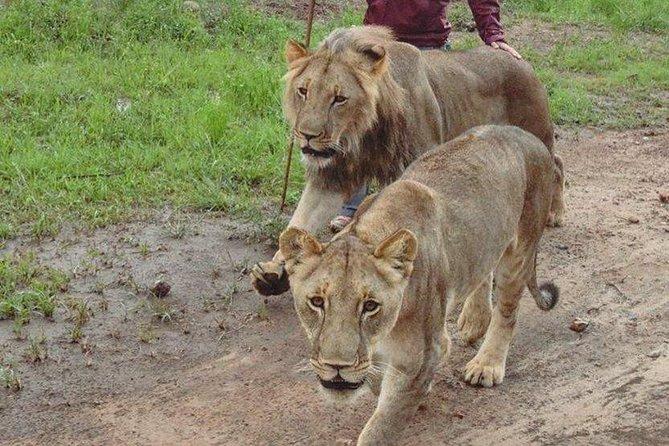 Rhino Walk and Culture, Livingstone, Livingstone, ZIMBABUE