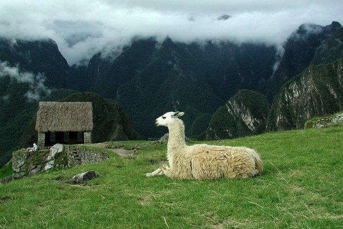 Excursión de 8 días desde Lima: Machu Picchu y la selva amazónica, Lima, PERU