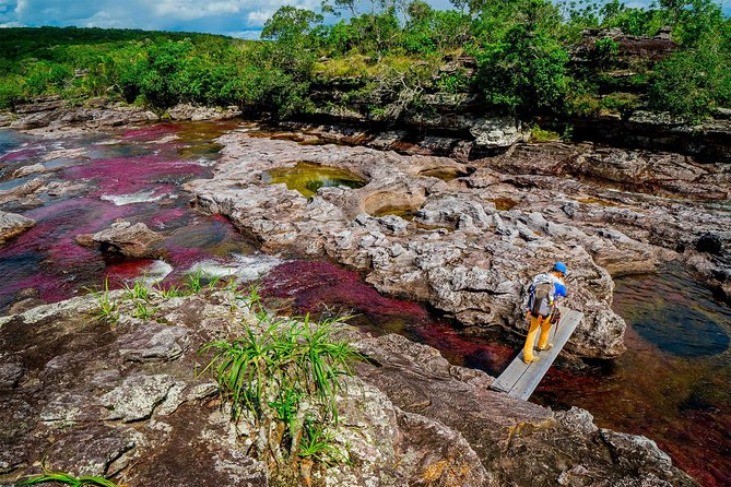 Cano Cristales & Jungle: 4 day trip from Bogota, Bogota, COLOMBIA
