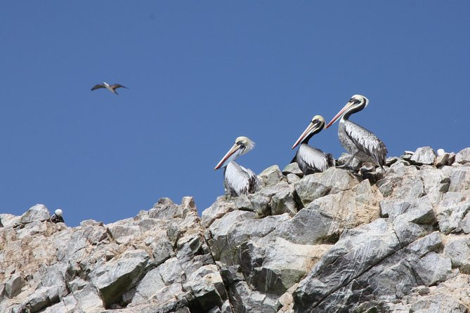 Ballestas Islands, Winery & Nazca Lines Private Tour from Lima, Lima, PERU