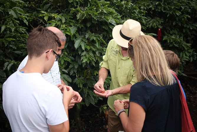 Private Group Coffee Tour, Boquete, PANAMÁ