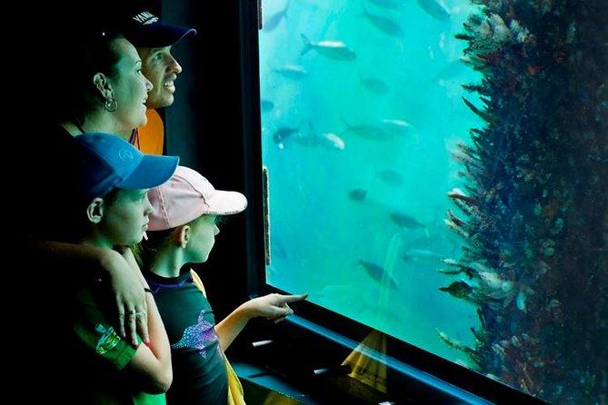 2-hour Busselton Jetty Package: Jetty Train and Underwater Observatory, Busselton, AUSTRALIA