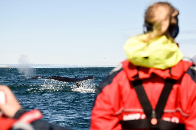 Leave behind Akureyri for this 2-hour whale watching experience. Limited to only 12 travelers, board your boat with a guide who can answer your questions and provide personal service. Search the ocean for humpback whales and other wildlife. This tour includes all necessary safety equipment. Choose between one of four departure times when you book<br><br>Elding is an environmentally friendly company and recognised worldwide for its environmental efforts. The aim, mission and goal is to minimise the operational impact on the environment while offering an unforgettable experience at sea.