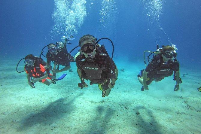 MÁS FOTOS, Full-Day Catalina Island Scuba Diving Tour from La Romana