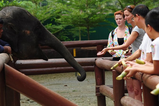 The journey takes approximately 1 hour 45 minutes. Our first stop is the Aborigine Settlement.<br><br>Kuala Gandah Elephant conservation was established in 1989 by the Department of Wildlife and National Parks. The center is a base for the Elephant Relocation Team, which began the elephant translocation programme in 1974. The only one of its kind in Malaysia, the team is dedicated to locating, subduing and then translocating problem elephants from areas where their habitats are constantly being encroached by plantations and to other suitable habitats throughout the Peninsular such as Taman Negara. Over the past 25 yrs the center has helped prevent the further declined of the elephant population by relocating more than 300 wild elephants.