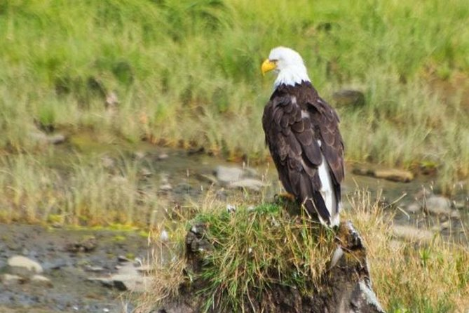 Enjoy a beautiful coastal journey into the Alaska Rainforest Sanctuary, here you can see wildlife ranging from bald eagles to the famous black bears. This tour is a great choice for families.