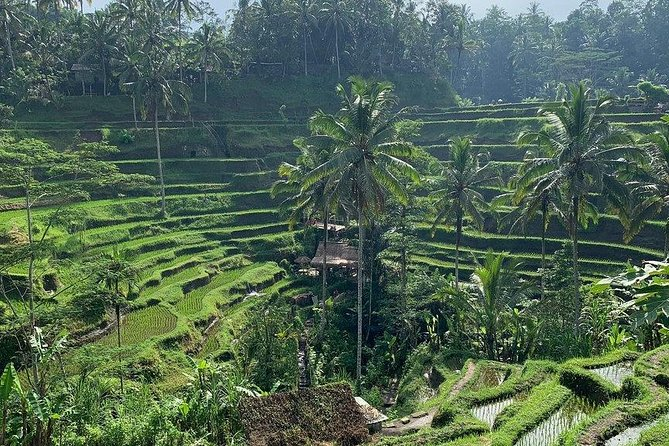 Bali in 1-Day: Temple, Waterfall, Coffee, Volcano, Rice Terrace and more, Seminyak, INDONESIA