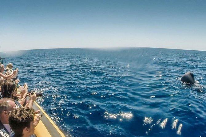 Recorrido de avistamiento de ballenas por las islas Azores, Ponta Delgada, PORTUGAL