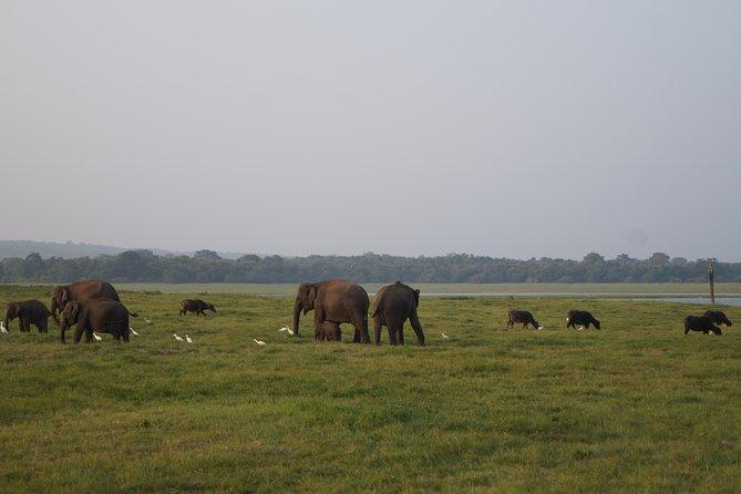 Safari Minneriya and Kaudula Park, Anuradhapura, Sri Lanka