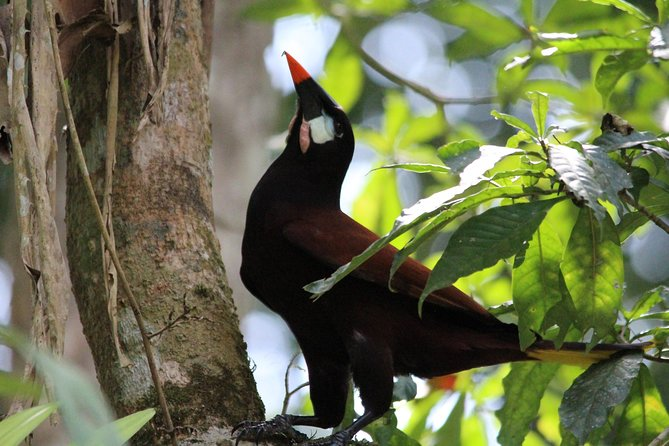 Guatemala Birding Tour at Tikal National Park, ,
