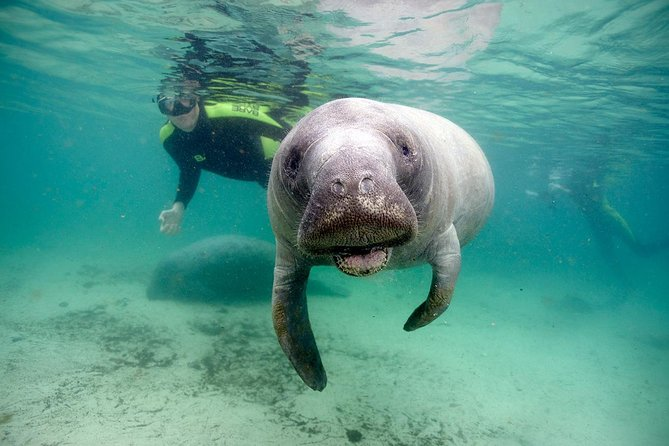 There is nothing better than having the boat to yourself for a manatee snorkel tour! Swim alongside the gentle giants on our professionally guide snorkel tours.The price includes all equipment, full 5mm wet suits, mask, snorkel, towel service, hot chocolate, coffee, hot showers, boat coats and heated changing facility. This tour is for up to 6 people, call us for pricing on larger groups.