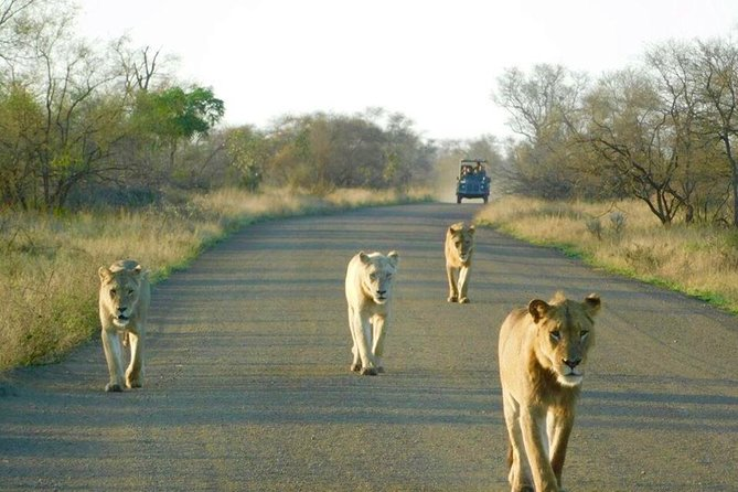 Private 3 Day Kruger Park Safari from Johannesburg, Johannesburgo, África do Sul