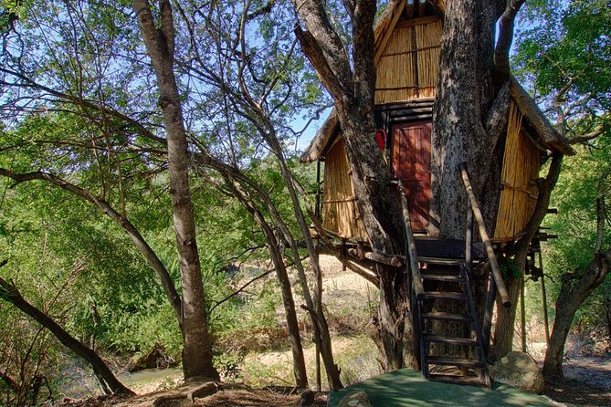 3 Day Treehouse Kruger National Park Safari, Johannesburgo, SUDAFRICA