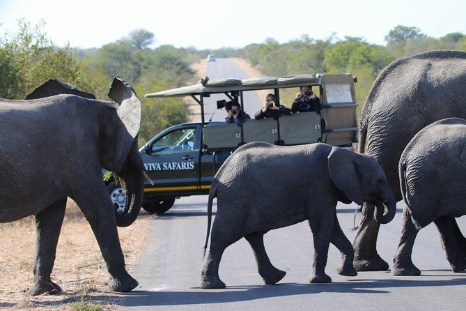 3 Day Classic Kruger National Park Safari, Johannesburgo, South Africa