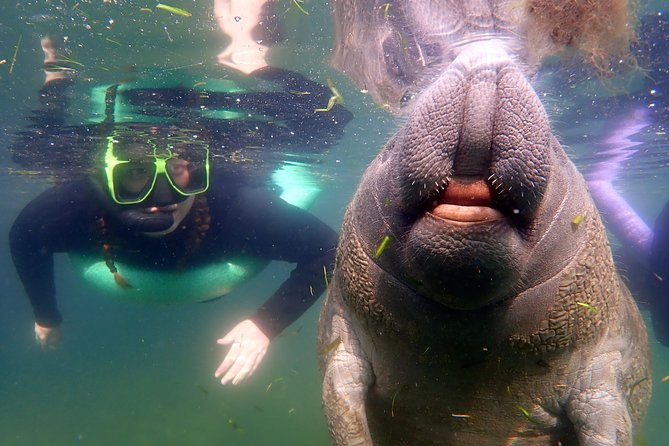This private manatee snorkle tour may only be 3 hours, but the memories for your group will last a lifetime! Your very own USCG certified captain will embark with your private group to explore the refuge and get you up close with our 'gentle giants'!