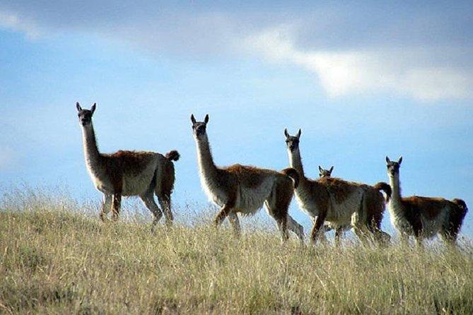 MAIS FOTOS, El Calafate Safari Experience