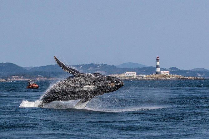 Excursión de avistamiento de ballenas en barco zodiac en Victoria, Isla de Vancouver, CANADA