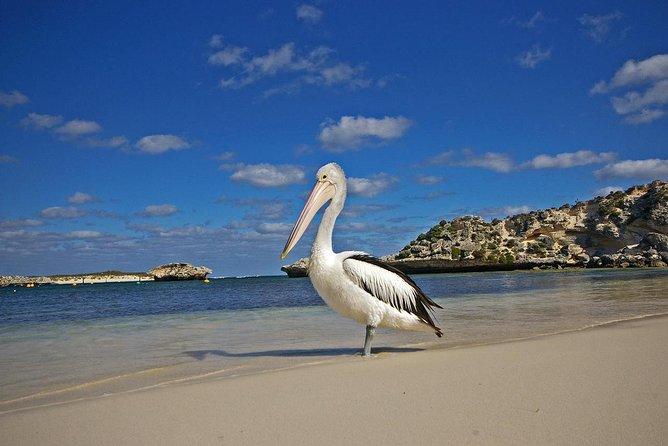 Penguin Island and Caversham Wildlife Park Day Trip From Perth, Perth, AUSTRALIA