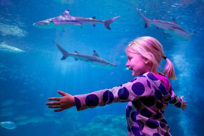Enjoy a visit to SEA LIFE in Oberhausen. Dive into the fascinating world under the sea and experience the exciting and beautiful underwater world and explore the largest shark nursery in Germany.