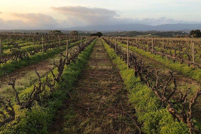 The Algarve Wine Experience, Lagos, PORTUGAL