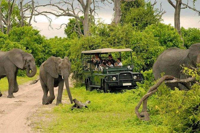 Chobe Day Trip From Livingstone, ,