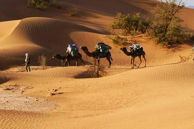 notre randonnée commence dans l'après-midi et vous emmène à dos de chameau dans le désert du Sahara avec ses paysages de Hammada, ses tamaris et ses immenses dunes de sable, mais aussi avec la vie nomade de ses habitants. <br><br>Selon la saison et le mouvement des nomades, nous pouvons rencontrer des familles nomades berbères qui illustrent la vraie vie dans le désert, vous profiterez d'un coucher de soleil pittoresque plus tard. Matin suivant Admirez un lever de soleil inoubliable et savourez un petit-déjeuner servi en plein air avant de revenir au village de Mhamid, où l'arrivée est prévue vers 10h00. Travel To Desert vous remercie de votre visite et de votre découverte du meilleur désert du Sahara au Maroc avec nous. Si vous souhaitez un transfert privé de Marrakech ou de Ouarzazate au désert de Mhamid, veuillez nous contacter.
