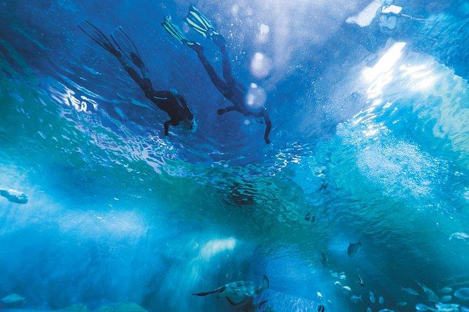 Snorkel with Sharks at AQWA, Perth, AUSTRALIA