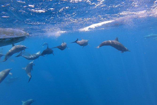 Avistamiento En Delfines, Tortugas Y MAS, Puerto Escondido, Mexico