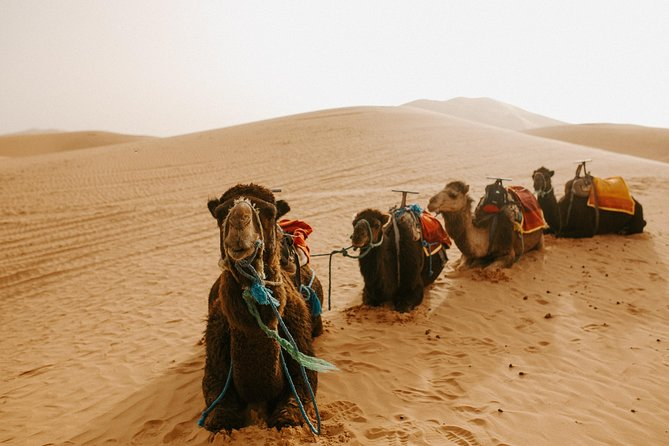 3-Day Guided Desert Tour from Fez to Marrakech, Fez, MARROCOS