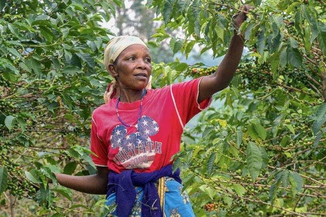 Visit to an Original Historic Coffee Farm Guided Tour including Transfer, Río de Janeiro, BRASIL