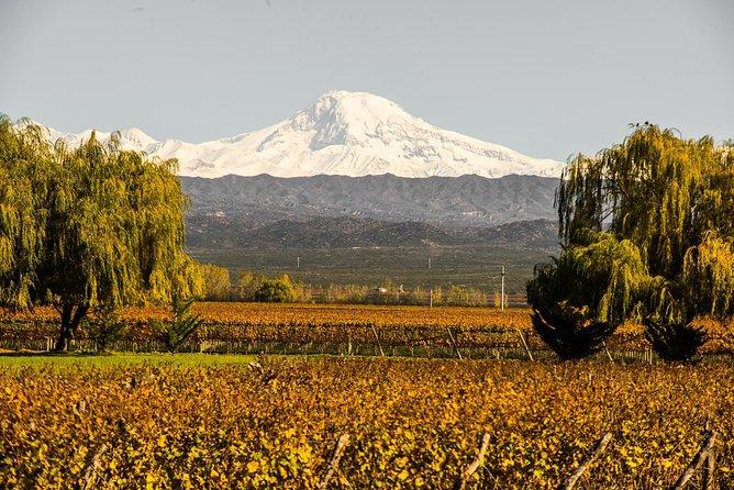Luján de Cuyo wine tasting tour, Mendoza, ARGENTINA