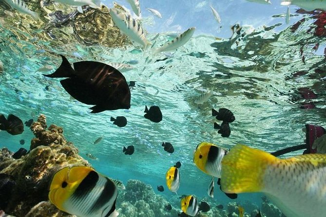 Snorkelling Experience, Puerto Escondido, MÉXICO